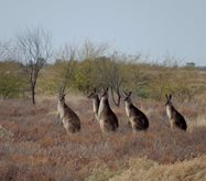 We shared the property with many roos.<br/>