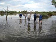 The team undertaking waterbird survey at Back Creek Swamp. Photo Sue Akers.<br/>
