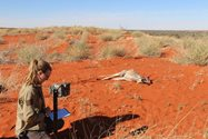 Setting up a motion-sensor camera for monitoring a carcass site. Photo by Thomas Newsome<br/>