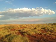 Edgbaston's beautiful spinifex grasslands.<br/>Photo by Gabrielle Lebbink