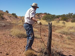 Bush Heritage Australia Volunteer Alan removing internal fences from an area high in spinifex at Pullen Pullen – twisting the barb wire preparing it to be wounded up. <br/>