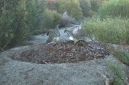 Image #3: A pair of Malleefowl working on their mound.<br/>