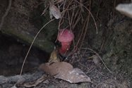 A pretty pink find in the hollowed base of a fallen tree.<br/>