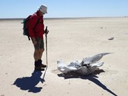 <br/>Ken Judd contemplates bleached whale skeletons during the three day trek. Photo by Michelle Judd