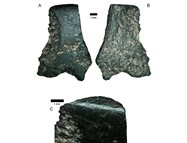 The stone axe fragment found at the dig.<br/>