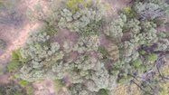 Aerial view of Sword Cactus through the brigalow.<br/>