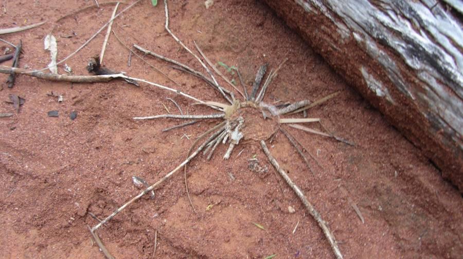 With the door closed. & Trapdoor spiders - Bush Heritage Australia