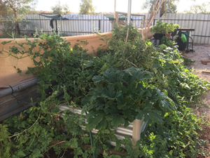 Despite the challenges, it's been worth working on our vegetable garden for fresh supplies. Photo Helene Aubalt.<br/>