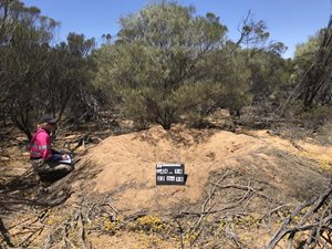 The reward, finding a Malleefowl mound with other Malleefowl Recovery Team volunteers.<br/>