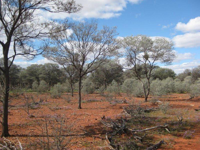 Mulga Magic At Naree Bush Heritage Australia