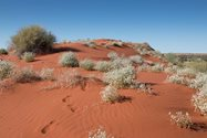 The famous red sand dunes of Cravens Peak. Photo by Amelia Caddy.<br/>