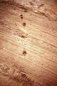 Fox tracks. According to Brian, &quot;The main way of identifying fox tracks is the large central pad. The fourth paw mark clearly shows this pad protrusion&quot;.<br/>