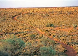 View over the spinifex Triodia dunefields. Photo Wayne Lawler/EcoPix.