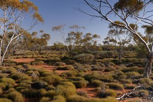 Mallee and Spinifex. Photo Cineport Media.
