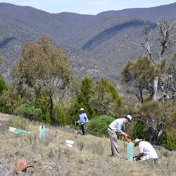 Volunteers in action doing revegetation work.