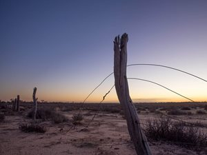 Old fencing on Charles Darwin Reserve, WA. Photo by Albert Wright.