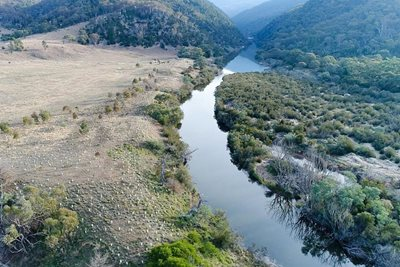 An area being revegetated along the Murrumbidgee River. Photo Annette Ruzicka.