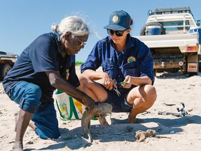 Senior Cultural Ranger Jessica Bangu guts a catfish with Karajarri Women's Ranger Coordinator Jackie Wemyss. Photo William Marwick.