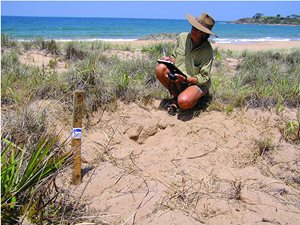 Mel Sheppard records the location of a Loggerhead Turtle nest on beaches adjacent to our Reedy Creek Reserve, Queensland.