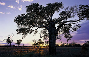 Sunset at Goonderoo. Photo Wayne Lawler / EcoPix.