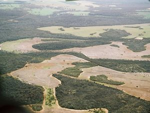 A patchwork of cleared and uncleared land around Chereninup Creek Reserve in WA. Photo Amanda Keesing.