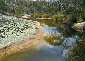 A freshwater pool on Chereninup Creek Reserve. Chinch Gryniewicz.