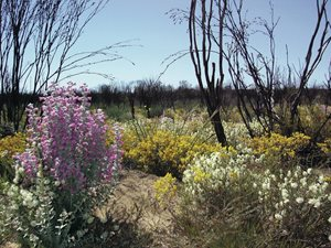 Charles Darwin Reserve is known for its wildflowers. Photo Leigh Whisson.