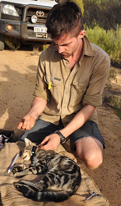 Tim Doherty fits a tracking collar to a cat. Photo Annette Ruzicka.