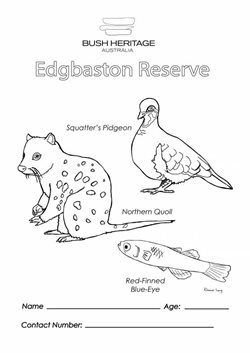 Colouring in sheet for Edgbaston Reserve.