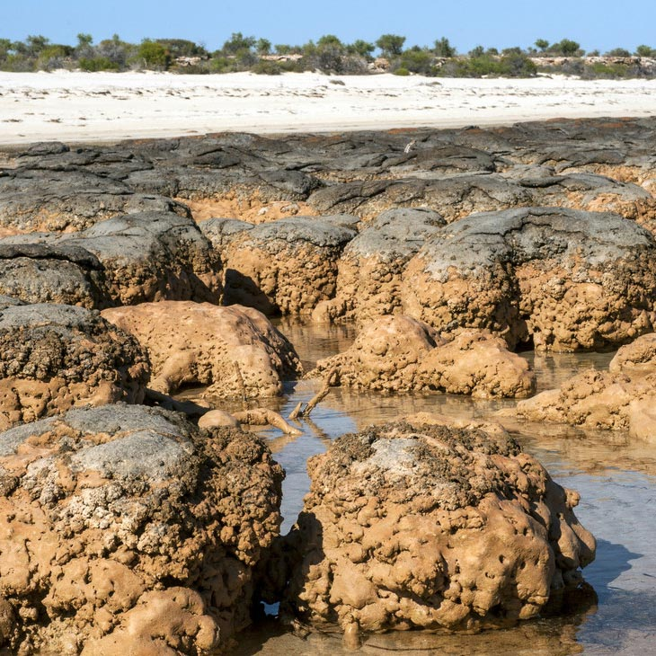 what are stromatolites