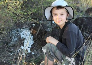 A young volunteer, Pelle, examines a bower at Goonderoo Reserve, Qld. Photo Kim Eastman.