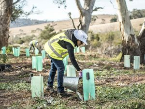 Ecosystem restoration at Scottsdale is made possible by the extraordinary efforts of volunteers. Photo Annette Ruzicka.