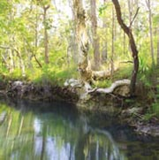 Gorge Creek Spring, Yourka Reserve, Qld. Photo Wayne Lawler / EcoPix.