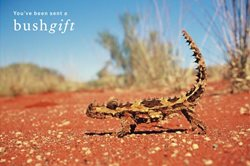 Thorny Devil Bushgift card.
