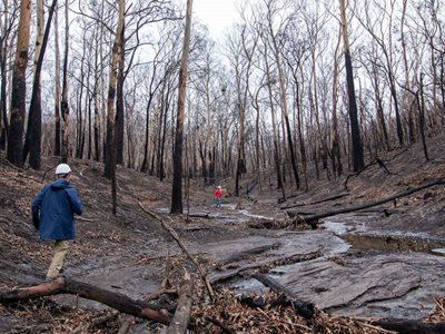 Staff survey a burnt creekline at Burrin Burrin Reserve. This particular spot is a monitoring site.