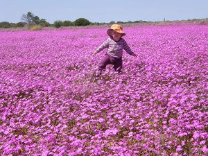 Beth Hales in a field of wildflowers for which Eurardy is renowned. Photo Leanne Hales.