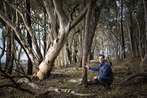 Ecologist Dr Matt Appleby amongst the woodlands at Tarcutta. Photo Annette Ruzicka.