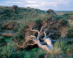 Windswept vegetation on Hunter Island, Bass Strait.