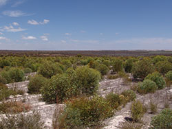 Reveretation are at Chereninip Reserve