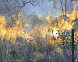 Establishing an effective fire management plan is one of the key activities of the partnership. Photo courtesy The Wunambal Gaambera Aboriginal Corporation.