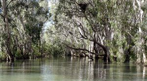 Sunday Creek at Yourka Reserve, Qld. Photo Department of Environment and Heritage Protection.