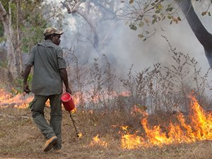 Lighting cool fires prevents damaging wildfires from sweeping through swamp and surrounding savanna.