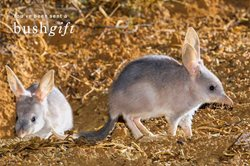 The Greater Bilby Bushgift card.