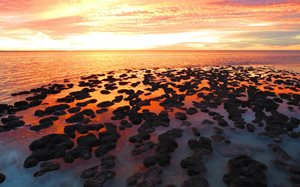 The Stromatolites of Hamelin Pool at sunset. Photo Jason Bartsch.
