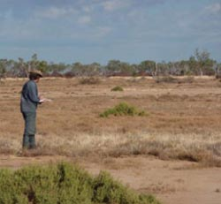 Paul Foreman assessing the Mitchell grass plains on Edgbaston Reserve, Qld. Photo Jen Grindrod.