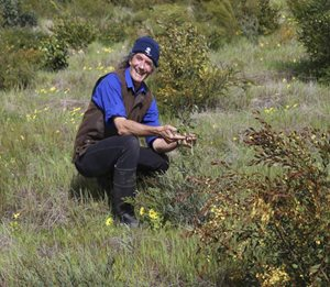 Simon Smale kneels among revegetation at Monjebup North Reserve.