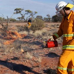 Burning Buffel Grass