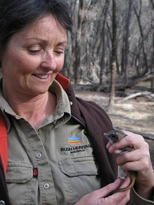 Ecologist Angela Sanders with a Red-tailed Phascogale. Photo Department of Parks and Wildlife (DPaW).