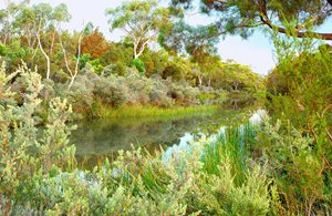 The Aspley River on South Esk Pine Reserve. Photo Wayne Lawler / EcoPix.