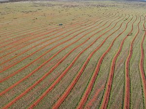 Rip lines ready for revegetation on Bush Heritage's Eurardy Reserve, WA. Photo Katelyn Reynolds.